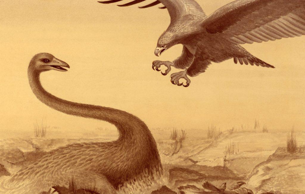 aves prehistoricas teratórnidos