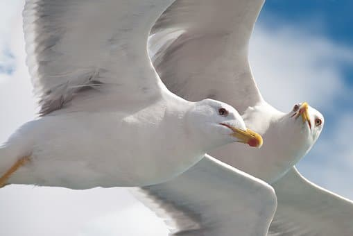 aves marinas y mas