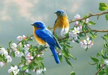 Por que cantan los pájaros-9
