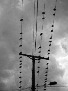 por-qué-las-palomas-no-se-electrocutan-2